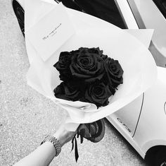 ♕ pinterest | alexislee17 King Fashion, Parts Of A Plant, Black And White Photography, All The Colors, Red Roses, Planting Flowers, Bloom, Floral, Pretty