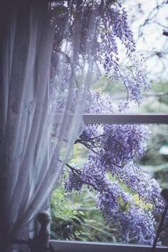 """rosiesdreams: """"Wisteria through the window """" Beautiful Flowers, Beautiful Places, Beautiful Pictures, Window View, Through The Window, Shades Of Purple, Belle Photo, Windows And Doors, Planting Flowers"""