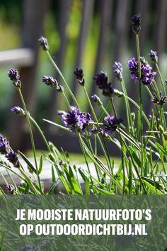 Deel je mooiste foto's met alle lezers van Outdoordichtbij.nl? Check hier hoe! Plants, Outdoor, Instagram, Outdoors, Flora, The Great Outdoors, Plant