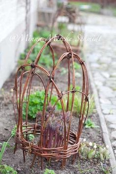 Peony support made with grape vines