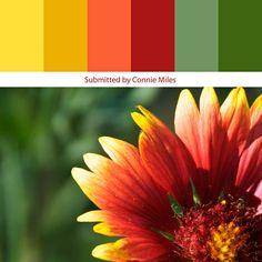 Sunflower Rust color palette: potential living room color scheme (except toned down a lot)