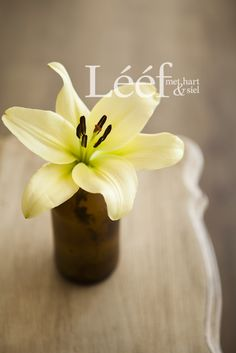 Fotograaf - Candice Askham Gallery Wall, Lily, Hart, Afrikaans, Flowers, Plants, Gifts, Gift Ideas, Inspiration