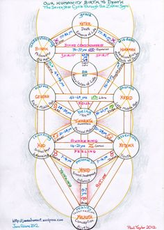 our humanity - birth to death 7year cycles tree