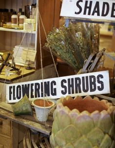Flowering Shrubs and Containers