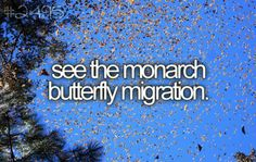 #43: see the monarch migration