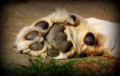 Lion Paw!