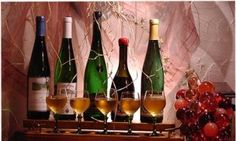 About Us~ Wine Brindis Importers