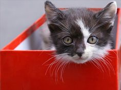 cute kitty in a red box...