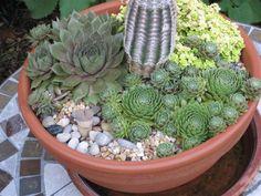 Kövirózsa: többet tud, mint gondolnánk 1 Succulents, Mint, Garden, Plants, Garten, Lawn And Garden, Succulent Plants, Gardens, Plant