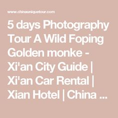 5 days Photography Tour A Wild Foping Golden monke - Xi'an City Guide Coach Tours, One Day Tour, Photography Tours, Tour Operator, China Travel, Dumpling, Travel Information, Car Rental, Travel Agency