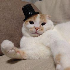 シャレオツなハット貰った  I got a hat