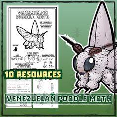Venezuelan Poodle Moth -- 10 Resources -- Coloring Pages, Reading & Activities Venezuelan Poodle Moth, Cute Moth, Wild Child, Teacher Pay Teachers, Lesson Plans, Teaching Resources, Coloring Pages, Reading Activities, Education