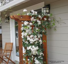 drought tolerant climbing flowers | Mediterranean garden with curving pathways of DG and drought tolerant ...