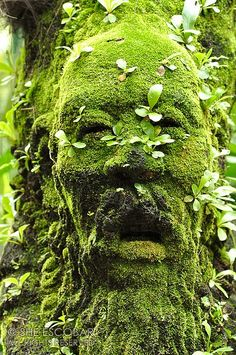 The Green Man Singapore Botanical Garden A figure of a man's head covered with moss and plants at The Mist House. The Green Man Singapore Botanical Garden A figure of a man's head covered with moss and plants at The Mist House. Dream Garden, Garden Art, Garden Design, Succulent Planters, Hanging Planters, Succulents Garden, Garden Plants, Garden Whimsy, Shade Garden