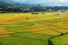 Rice Fields. Hualien, Taiwan 花蓮