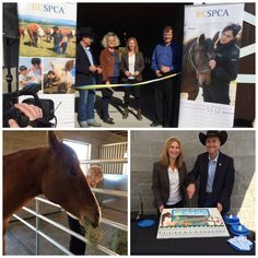 Government and community representatives joined BC SPCA staff and volunteers today to officially open the BC SPCA's new Recovery & Adoption Barn in Kelowna, which will temporarily house horses and farm animals rescued from abusive or neglectful situations in the Okanagan region. Get the full scoop when you click the picture.