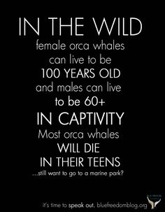 SeaWorld claims orcas live longer in captivity than they would in the wild...where are they getting their information? Wikipedia?
