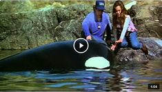 Watch the movie trailer. Available via youtube.com. Free Willy, Kid Movies, Movie Trailers, Watch, Youtube, Kids, Animals, Young Children, Clock