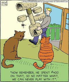 Kitten funny cartoons from CartoonStock directory - the world's largest on-line collection of cartoons and comics. Cat Jokes, Funny Cat Memes, Funny Cartoons, Funny Cats, Funny Animals, Hilarious, Cat Humour, Memes Humor, Funny Quotes