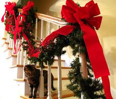 This is a good way to fill up the space with huge bows. Maybe the cats won't tare it down.