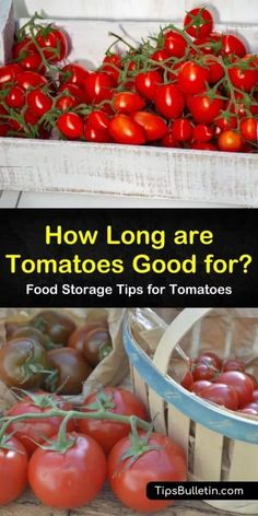 How long are tomatoes good for anyway? Discover the most effective strategies for how to store tomatoes, whether through long-term or short-term methods. How To Store Tomatoes, Types Of Tomatoes, Small Tomatoes, Plum Tomatoes, Heirloom Tomatoes, Growing Tomatoes, Canning Tomato Juice, Canning Tomatoes, Freezing Cherry Tomatoes