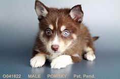 Cute Puppy – Check out these Great Amazon Cyber Monday Deals http://www.pindoggy.com/pin/9626/