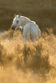 wild kaimanawa - Teddy needs a dapple All The Pretty Horses, Beautiful Horses, Animals Beautiful, Cute Horses, Horse Love, Grey Horses, Horse Therapy, Horse Ears, All About Horses