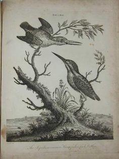 116 Engraved Plates, 1797-1803, Animals, Birds, Plants Architecture,etc. in Art, Prints, Antique (Pre-1900), Botanical/ Plants | eBay