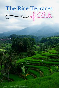The stunning Rice Terraces of Tabanan, Bali Places Around The World, Travel Around The World, Around The Worlds, Places To Travel, Places To See, Bali Baby, Rice Terraces, Vacation Destinations, Travel Pictures