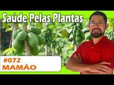 Saúde Pelas Plantas - Mamão [dengue, cicatrizante, diabetes, colesterol, vermífugo] - YouTube