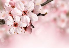 Spring border background with pink blossom. Spring border or background with pin , Beautiful Flowers Images, Flower Images, Pink Blossom, Blossom Flower, Cherry Blossoms, Caleb Y Sofia, Força Interior, Interior Design, Jw Gifts