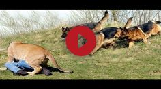Best Disciplined And Well Trained Dogs