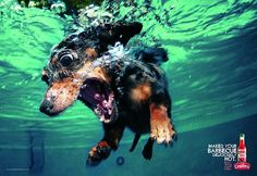 Print ad: Extra Strong Pepper Sauce: Dachshund