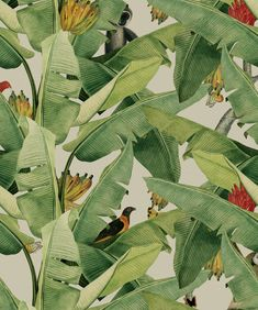 Jungle Fever Wallpaper (Two Roll Set)