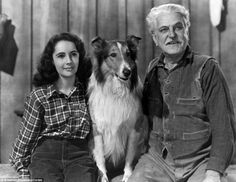 Early years: Elizabeth Taylor stars as Priscilla with Frank Morgan in Courage Of Lassie (1946)