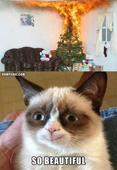 Grumpy Cat is happy.about a BURNING Christmas tree.wow, that's real mature <--- it's a Grumpy Cat meme, calm down lol! Grumpy Cat Quotes, Funny Grumpy Cat Memes, Funny Cats, Funny Memes, Grumpy Kitty, Grumpy Baby, Cat Jokes, Grump Cat, Fun Funny
