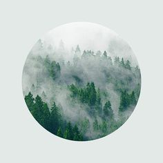 Landscape Photography Mountains Photograph Evergreen Trees Mysterious Fog Forest…