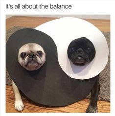 Funny Animals Of The Day 21 Photos #dogsfunnyjokes