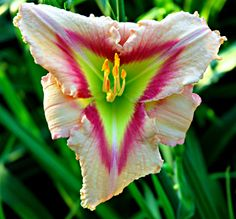 Feathered Prism (Day Lily)
