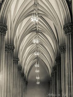 Gothic Cathedral - St. Patrick's Cathedral by stillnessinlife via flickr