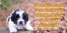 Puppy training , How books and videos help you in dog training.How books and videos help you in dog training? Basic Dog Training, Dog Bed, Puppies, Dogs, Animals, Cubs, Animales, Animaux, Pet Dogs