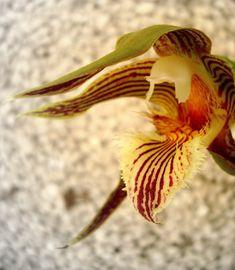 Fotografía de Orquídeas