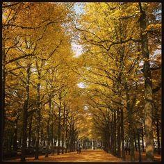 Lange Voorhout - herfst