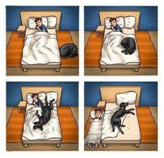 SOS Animal  com amor: A cama é de quem?