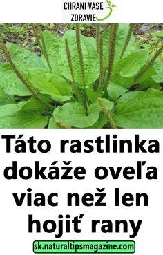 Táto rastlinka dokáže oveľa viac než len hojiť rany Detox, Plant Leaves, Lens, Health Fitness, Green, Outdoor, Gardening, Medicine, Weights