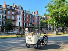 Holds up to 350LBS. Perfect for kids, pets, and even those with special needs Electric Cargo Bike, Special Needs, Street View, Pets, Animals And Pets