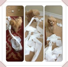 bella thorne kingston photos | bella thorne kingston toilet paper dec 5 Bella Thornes Puppy Has Some ...