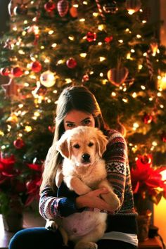 A Golden Retriever named Georgia. pictures Golden Retriever - Why Are They The Perfect Pets - Doggie Woof Dog Christmas Pictures, Christmas Post, Christmas Puppy, Christmas Card Photo Ideas With Dog, Christmas Cookies, Holiday Pictures, Photos With Dog, Dog Pictures, Dog Photography