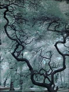 Look out...I'm about to wax poetic: if my heart were a tree, it would be this tree. Mainly because the tree looks like a whole bunch of arteries.
