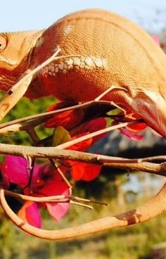 lengua de camaleon - mas lento #wattpad #short-story